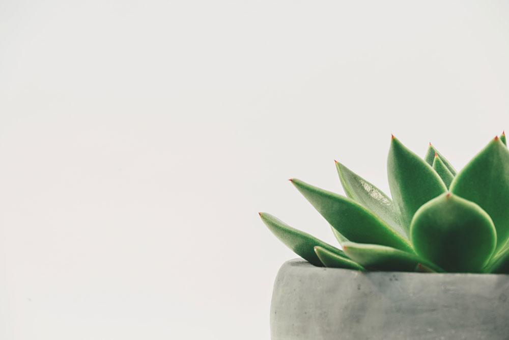 minimalist-type